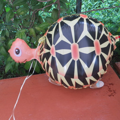 Turtle Pet Walker